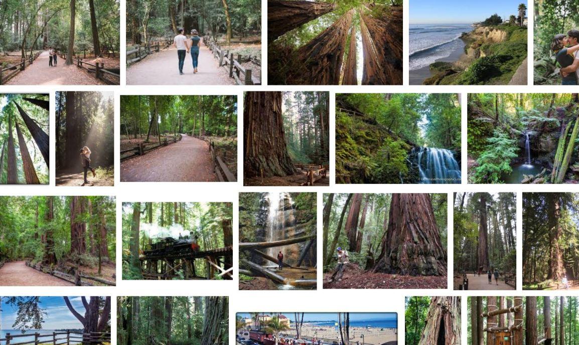 sc redwoods.JPG