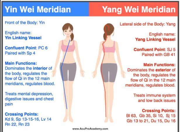 liver meridian p4