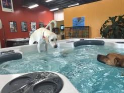 bonsai-saving-colby-in-the-pool