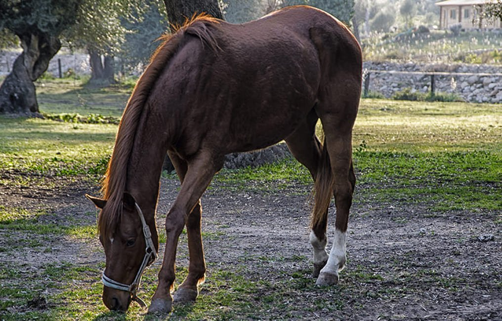 Buy a Horse
