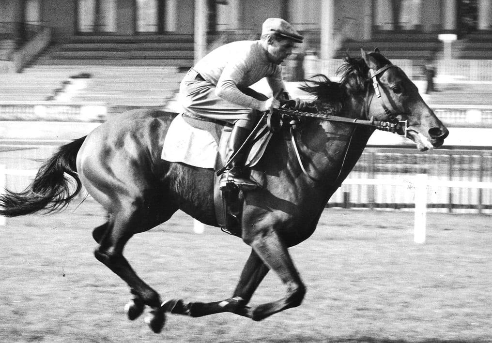 Ribot and his jockey Camici