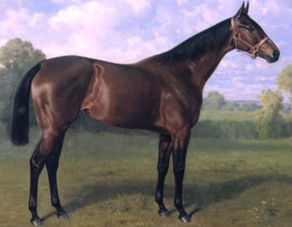 The English Thoroughbred Horse