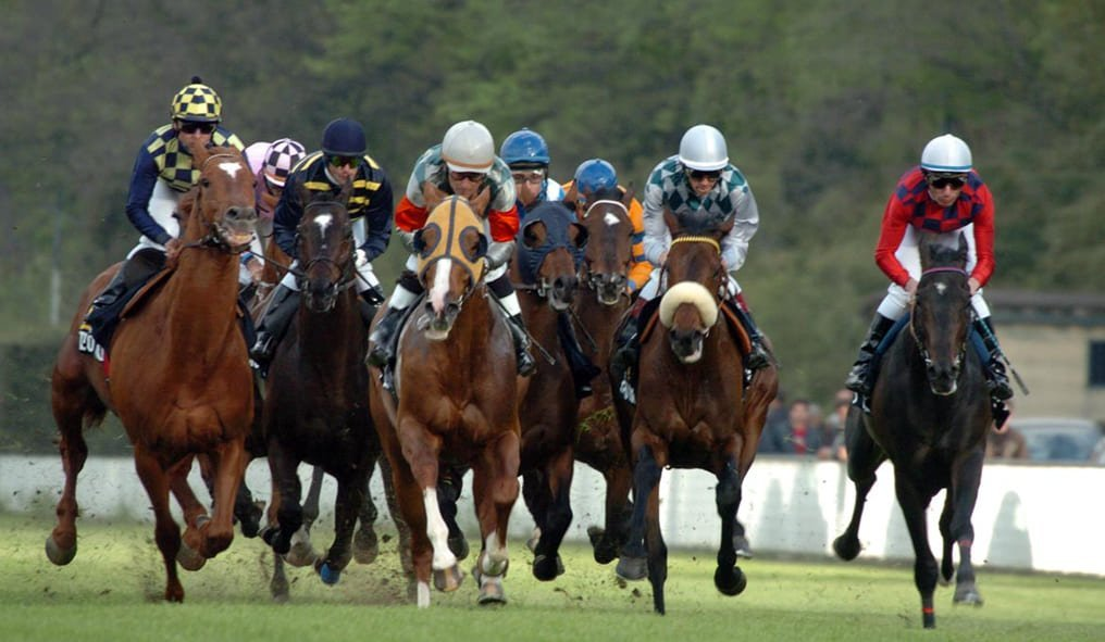 Race with English Thoroughbred Horse