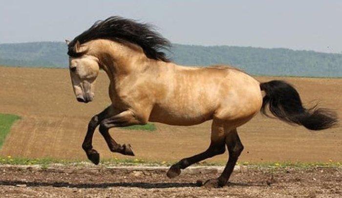 Galloping Horse Bracelet 8