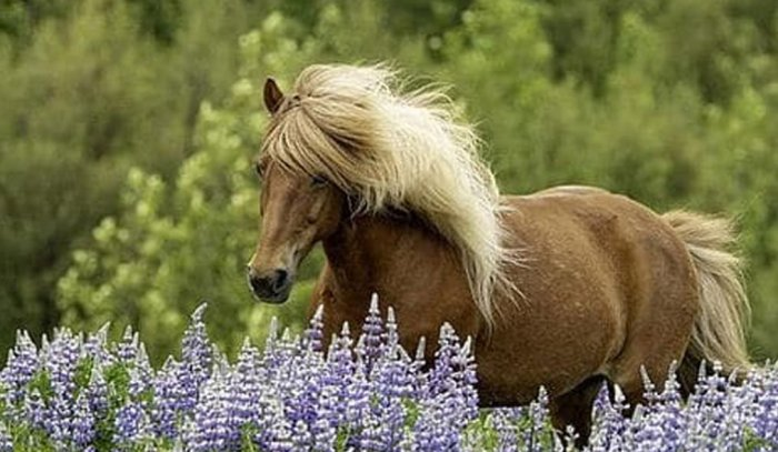 Horses and Flowers Earrings