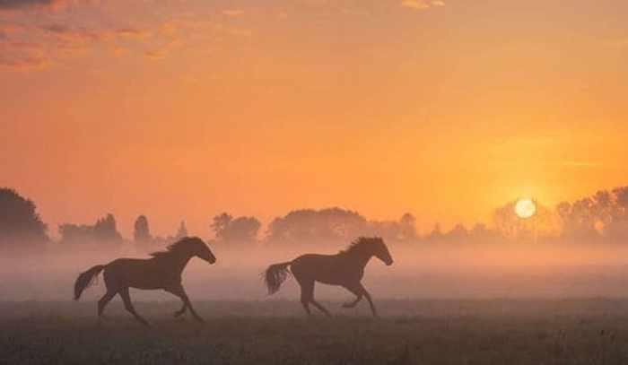 Two Gallop Horses Bracelet 6
