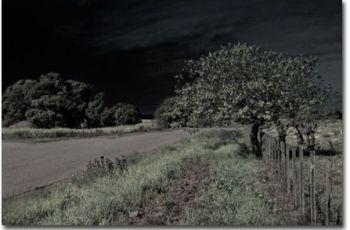 Efecto infrarrojo imagen imagen final