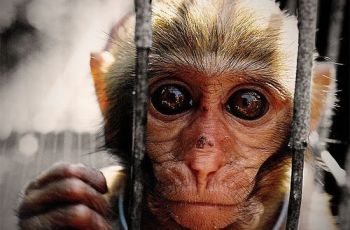 A portrait of a monkey, por s-a-m