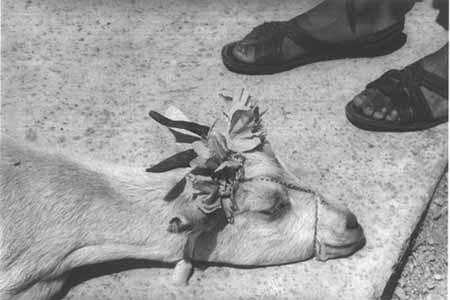 Antes de la Matanza, La Mixteca, Oaxaca 1992