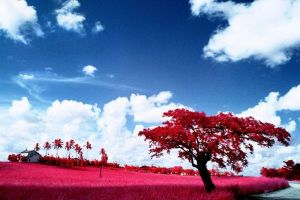 Gustavo Bettini paisaje rojo