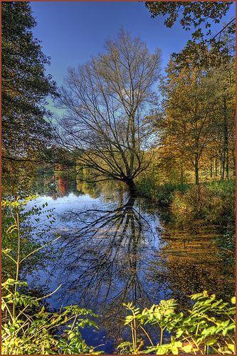 Autumn in Maasniel