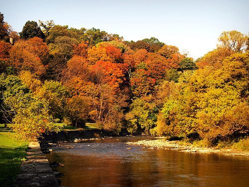 Autumn at Humber River