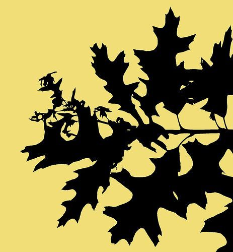 Oak leaf silhouette, por Bird Eye