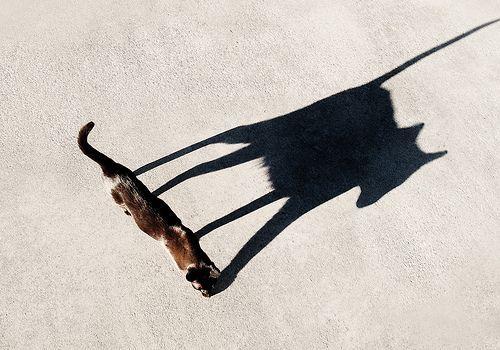 03 ninja cat, por Robert Couse-Baker