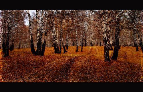 Autumn Landscape, por Ӎѧҧ@Ҷҿ