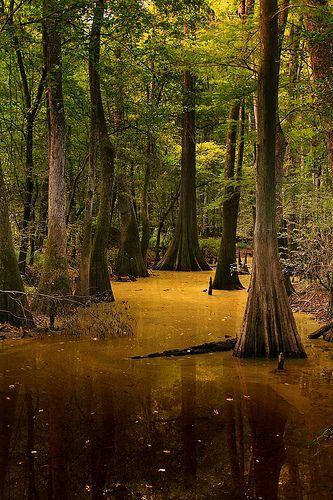 Congaree National Park, por silicon640c