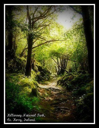 Killarney National Park, por Angela Stack Photography