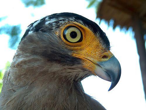 ~ Mr. Falcon ~, por Mohammed Alnaser