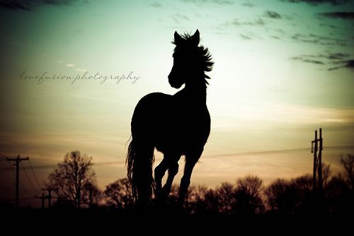 Majesty Ride Forth Victoriously, por kelsey_lovefusionphoto
