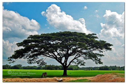 Nature in Bangladesh; Durgapur, Netrokona, por - Ariful H Bhuiyan -
