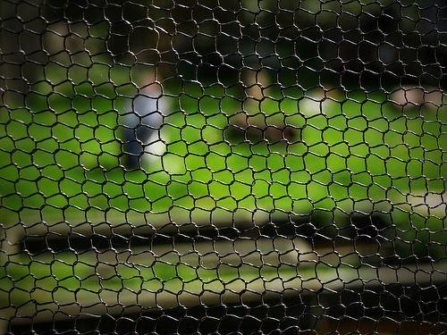 Fence, por Alice the Photo Ninja