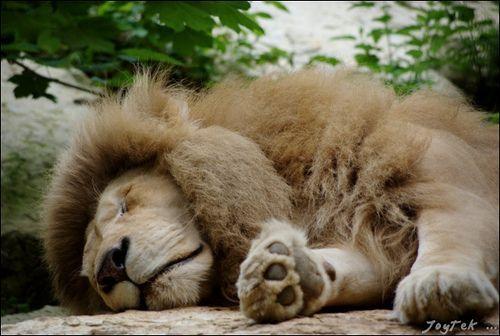 Zoo Parc Beauval, por JoyTek