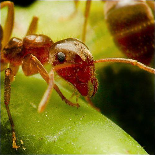~ ANT ~, por Stuart Williams