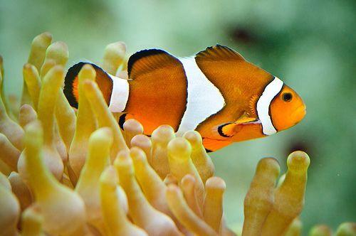 Nemo, por Sergiu Bacioiu