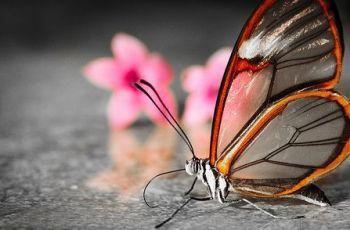 Transparent Butterfly, por Greg Foster
