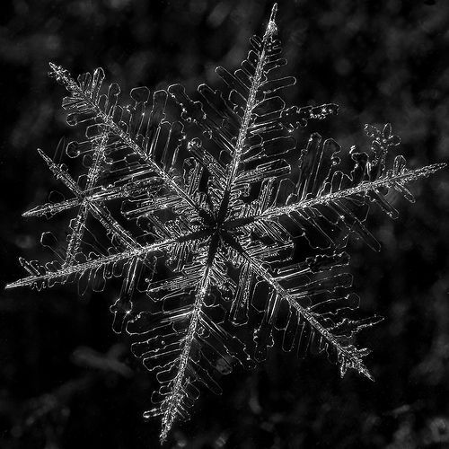 snowflake 1, por Margus Kulden