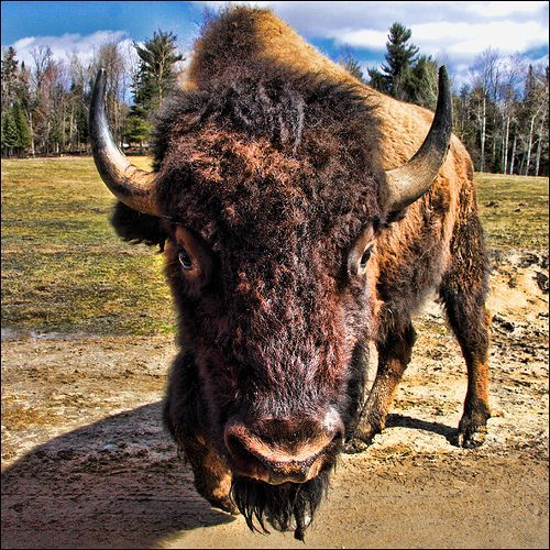 Consejos Para Hacer Fotografía de Fauna Salvaje
