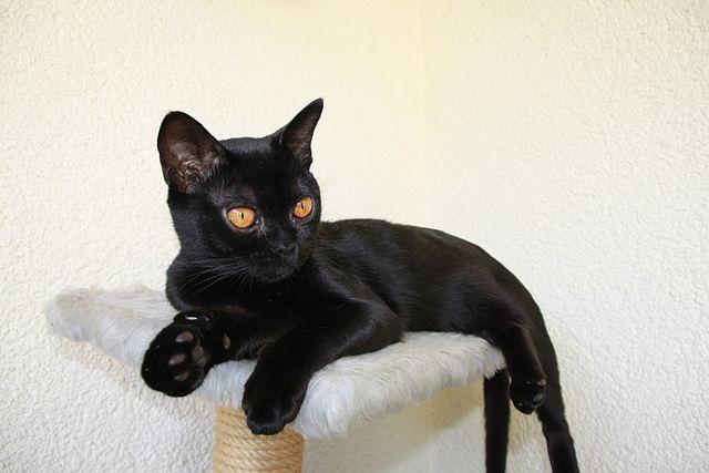 ¿Tienes un gato negro?