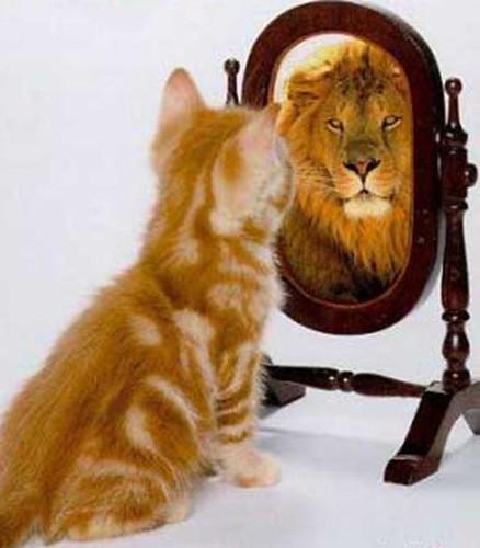 ¿Qué tiene tu gato en común con los leones?