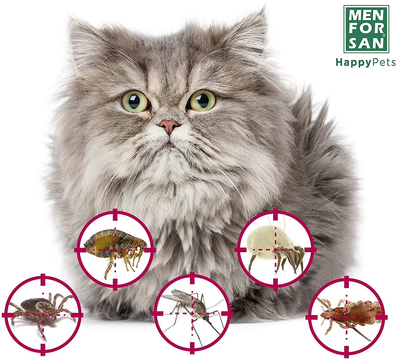 Desparasitantes naturales para gatos: ¡deshazte de los parásitos!