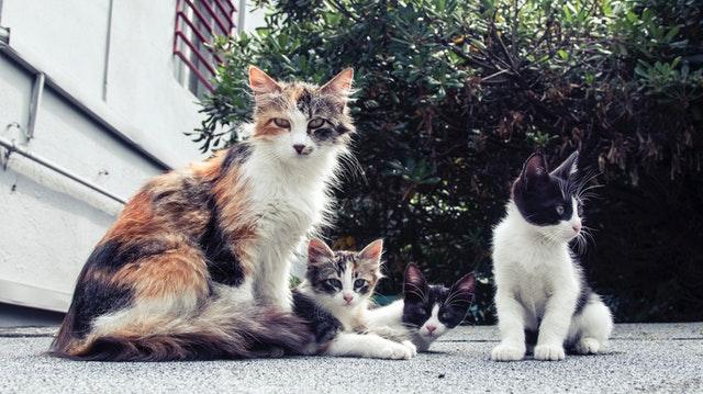Gatitos o gatos adultos: cómo elegir cuál es el adecuado para ti