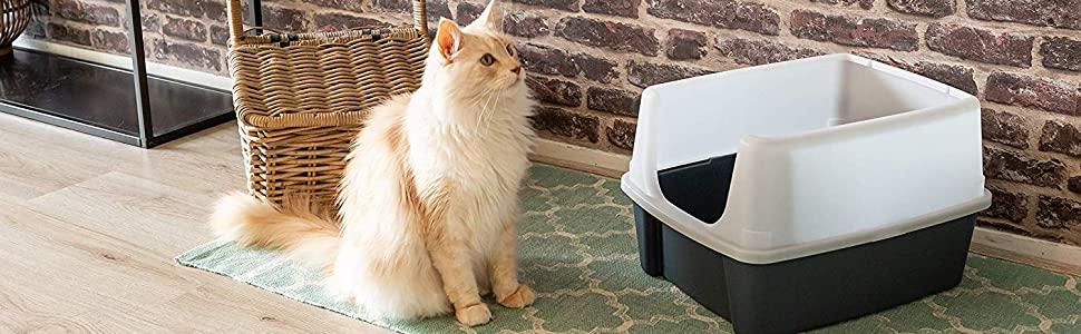 5 síntomas de infección del tracto urinario de tu gato a los que debe estar atento