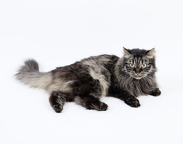 Datos sobre gatos que debes saber
