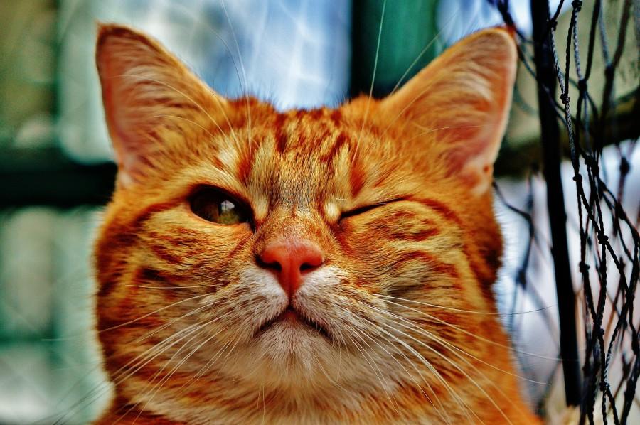 ¿Qué significa cuando un gato te guiña un ojo?  ¿Por qué mi gato me guiña el ojo?