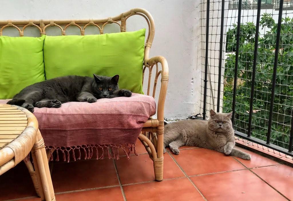 Cómo enfriar a los gatos en verano