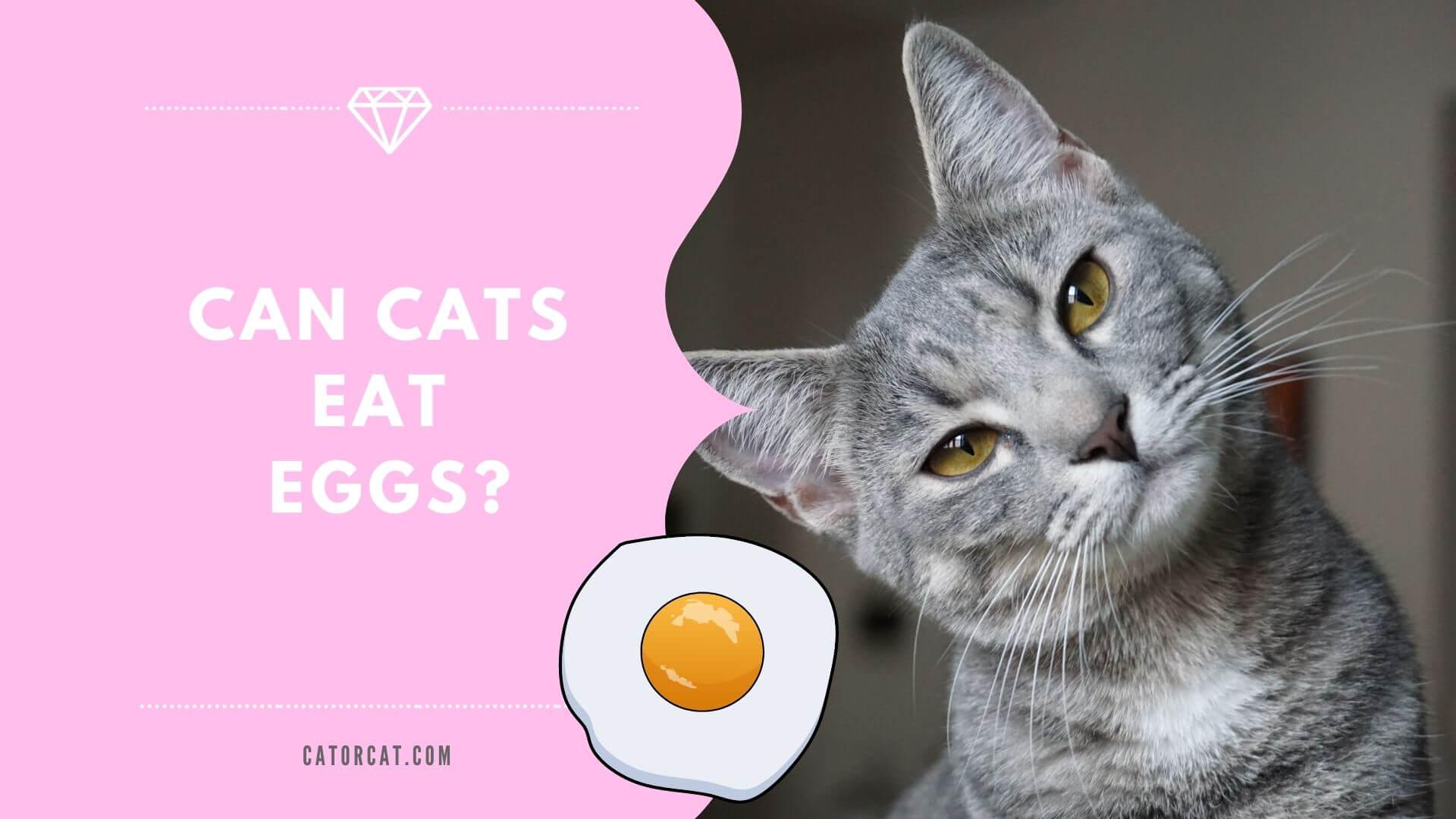 ¿Pueden los gatos comer huevos? ¿Son seguros y buenos, o malos?