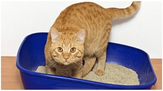 ¿Por qué los gatos intentan enterrar su comida?