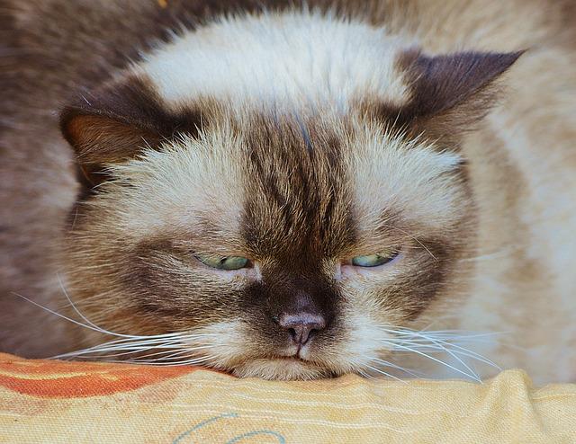 8 consejos para ayudar a tu viejo gato a dormir mejor