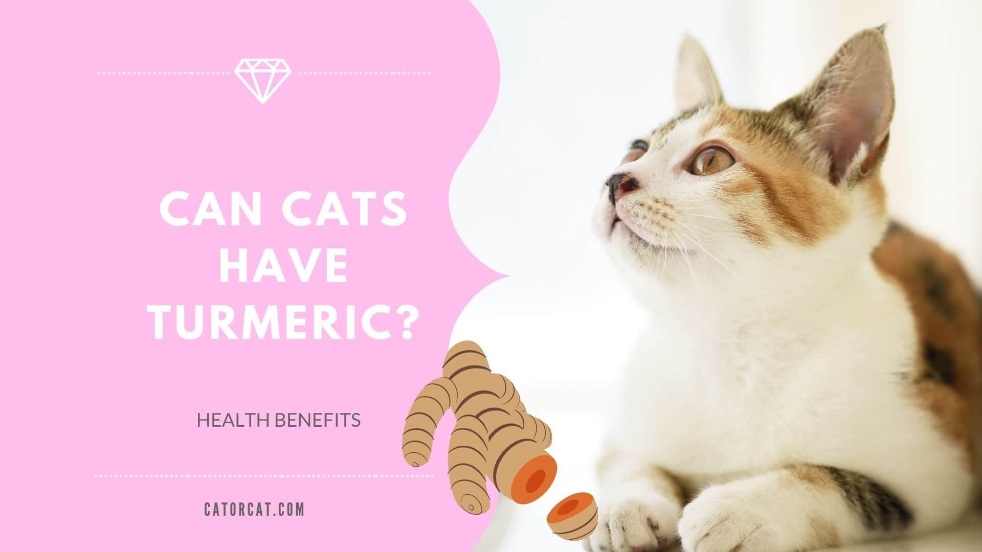 Cúrcuma para gatos    Beneficios para la salud de la Pasta Dorada