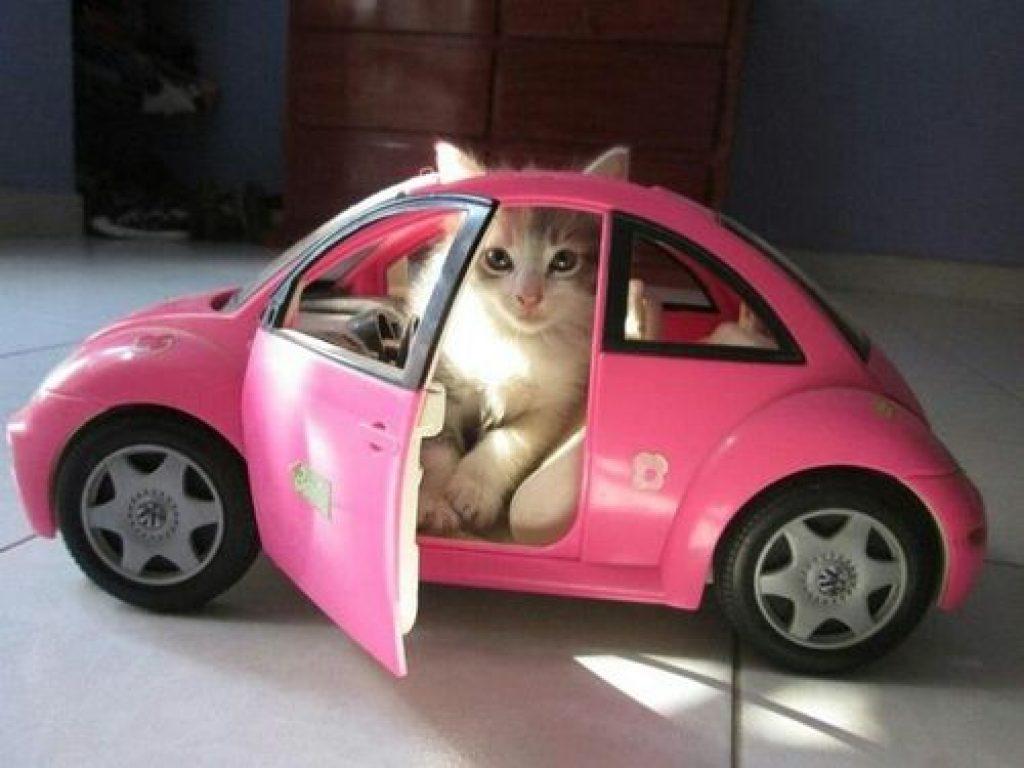 Haz que tu gato aprenda a que le guste ir en automóvil