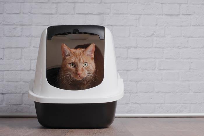 Estreñimiento en gatos: los secretos para la prevención y el tratamiento