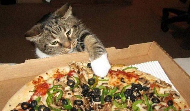¿Pueden los gatos comer pizza?