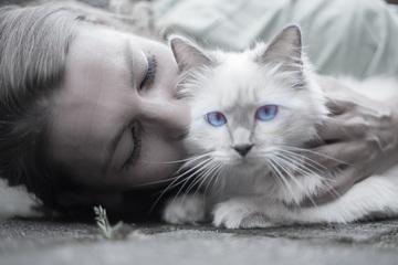 4 maneras fáciles de hacer más feliz a tu gato
