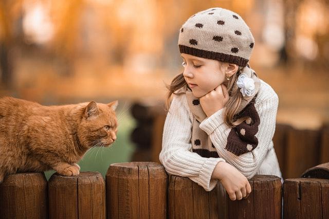 7 Cosas que no debes hacerle a tu gato
