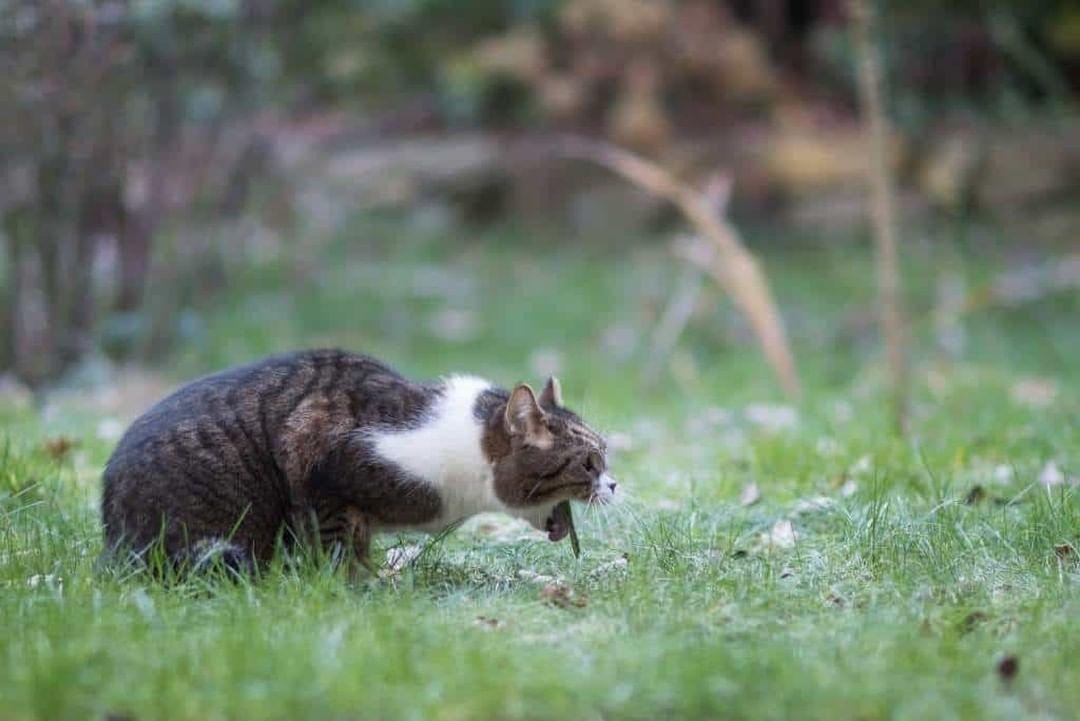 Vómitos en gatos: ¿Cuándo deberías preocuparte?