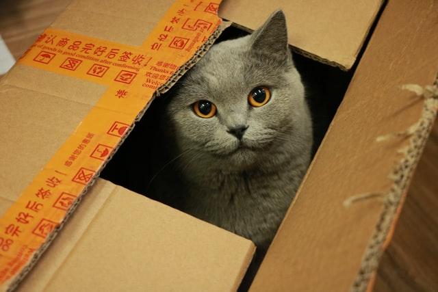 6 razones por las que los gatos aman tanto las cajas